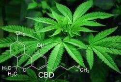Den kemiska beteckningen för CBD, den icke-psykoaktiva beståndsdelen i cannabisplantan som många cannabisaktier/företag bygger på.